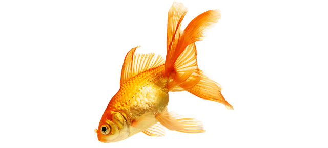 Translating skills for the job market: Can I put goldfish brain surgery on my resume?
